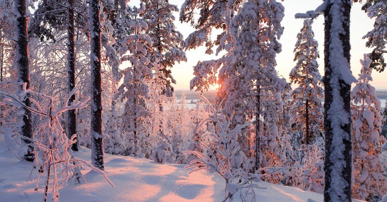 talvimaisema_2010_gary_wornell